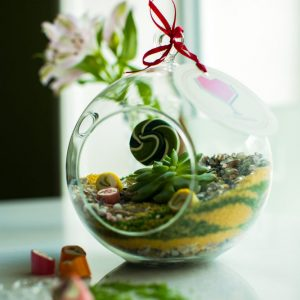 «Карамельный» флорариум от LUBLU