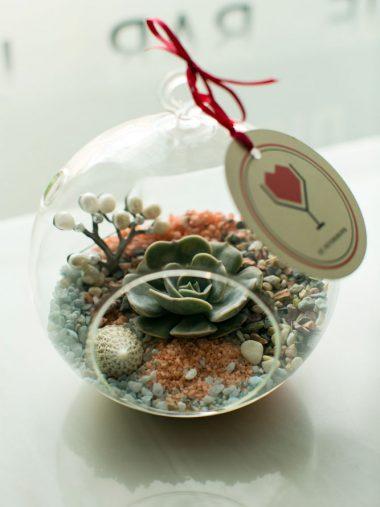 «Коралловый» флорариум
